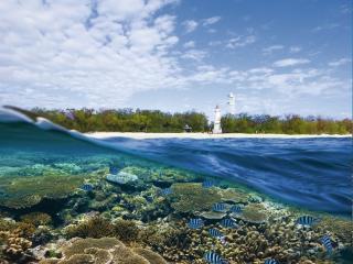 Island & reef