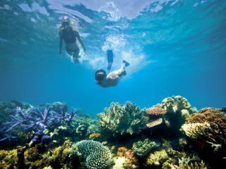 Activities Snorkelling